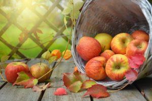 סלסלה עם תפוחים