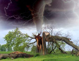 עץ שבור